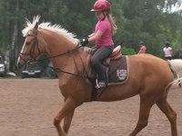 Кабриолет, конно-спортивный клуб (Ярославль, ул. Мостецкая, 8в)