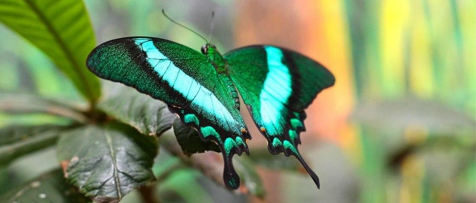 Казанский парк тропических бабочек (Казань, ул Спартаковская, д 6)